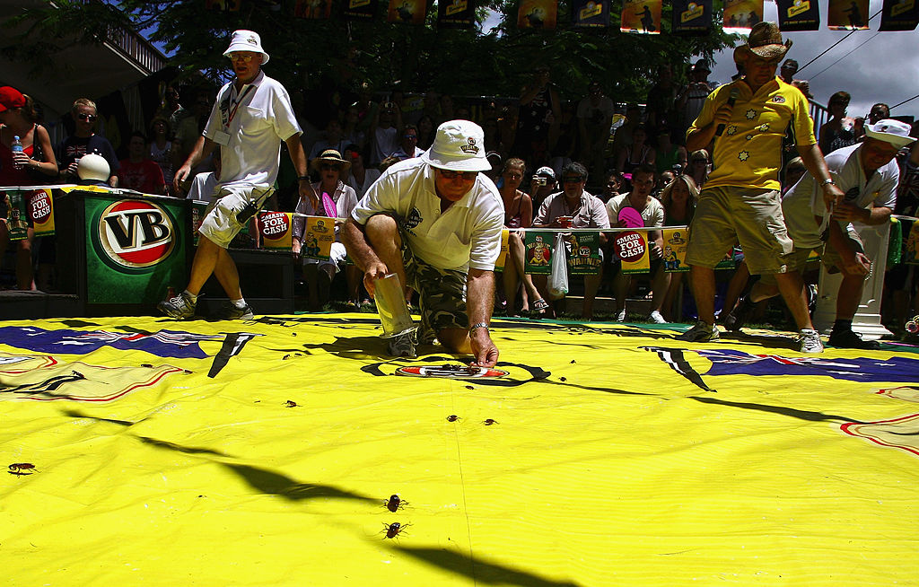 Article image for Brisbanites cheer on fastest roach to mark Australia Day