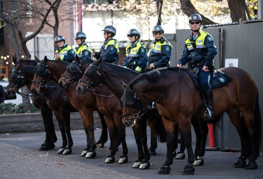Article image for From the track to the beat: NSW Police's finest new recruit