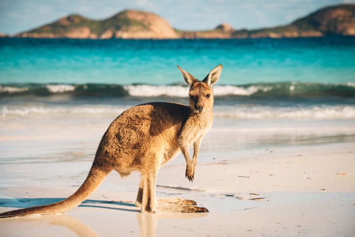 Tourism 'won't survive' without restoration of 'shot' confidence