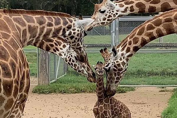 Article image for Mogo Wildlife Park celebrates an extra special Australia Day