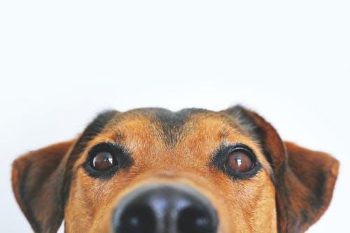 Older Australians deciding not to have pets