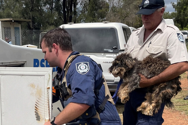 RSPCA seizes 79 dogs from NSW puppy farm
