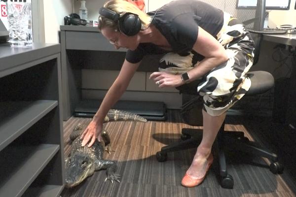 WATCH | Deborah Knight meets Rosie, the caffeine-addicted alligator