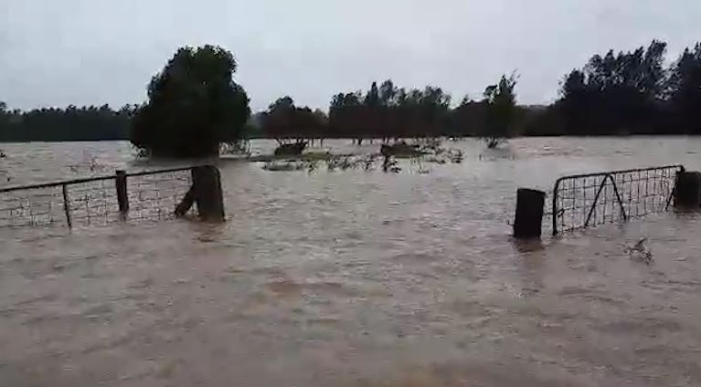 WATCH   Cow rescued from NSW floodwaters