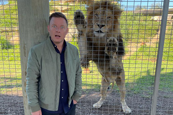Article image for WATCH | Ben Fordham comes face-to-face with lion at Sydney Zoo