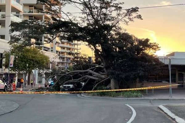 Article image for Former mayor calls for action after fallen tree left people in hospital