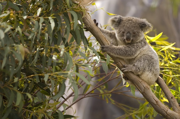 'I'm listing new species all the time': Government launches plan to protect biodiversity