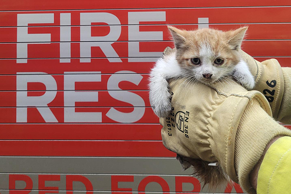 Stray kitten gets a helping hand from Sydney firies
