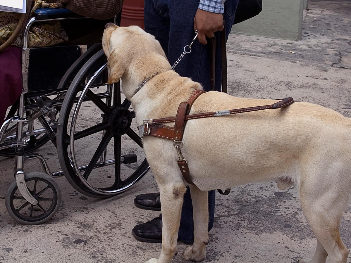 Article image for 'Grub act': Penrith man allegedly kicks trainee guide dog