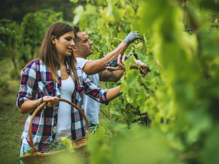 Slither of hope for seasonal workers