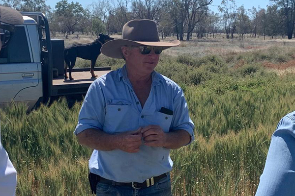 Article image for 'I've never seen anything like it in my lifetime': NSW farmer fighting mouse plague