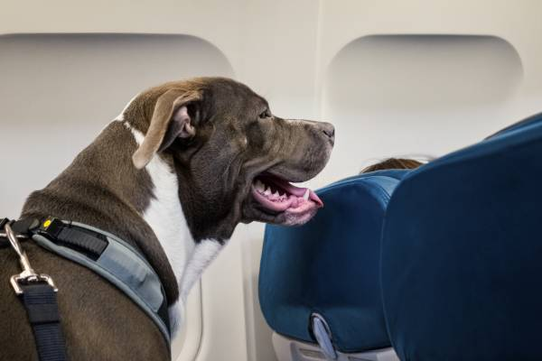 'Count me out!': Jim's not a fan of a plan to relax rules around pets on planes