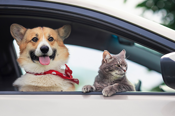 Article image for 'Adopt, don't shop': Free pet rego for rescue animals