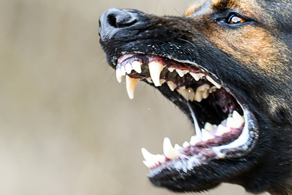 Warning for parents after baby mauled to death by family dog