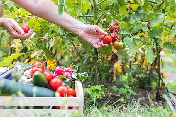 Article image for Worker shortage hits Australia's fruit and veg