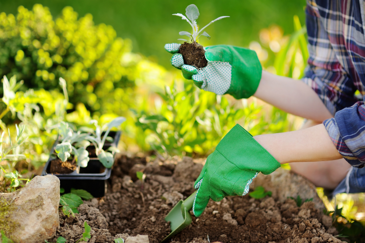 Article image for The best garden plants for those without a green thumb