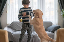 Dr Katrina shares her best tips to break your furry friend's bad habits