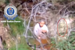 AJ Elfalak's guardian angel spotted in the bushland?