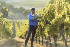 Sustainable wine