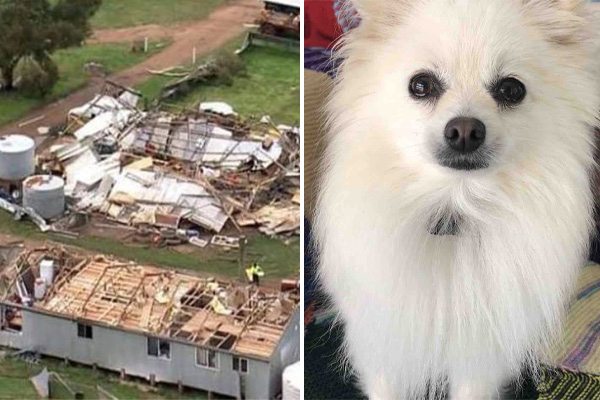 Article image for Family's beloved dog miraculously survives being thrown from home by tornado